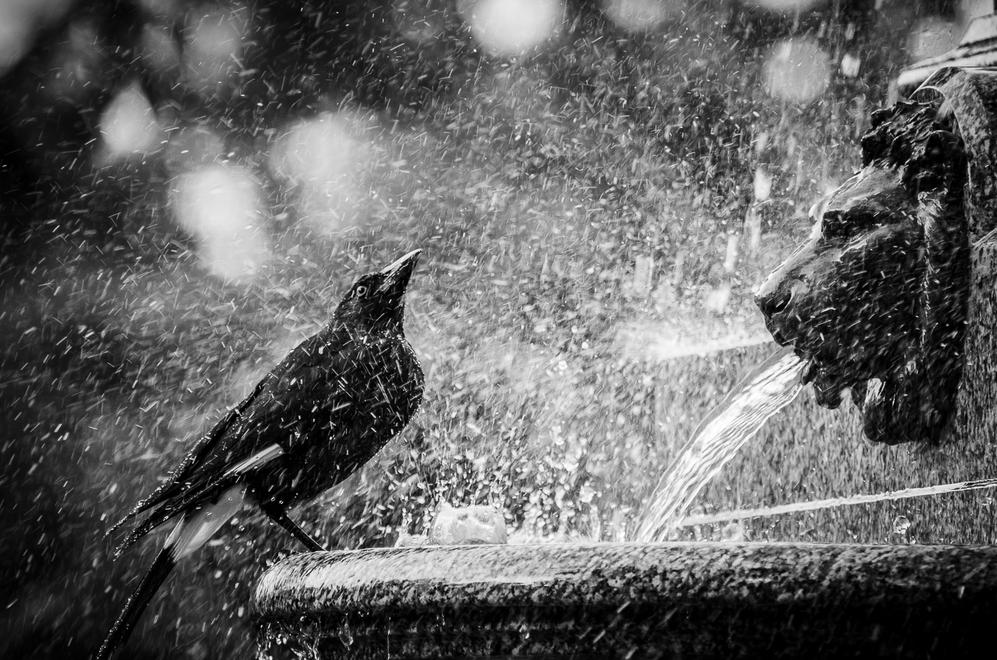 Thirsty by Adrian Hickey | Irish Times Amateur Photographer of the Year 2012 Shortlisted - Monochrome Category