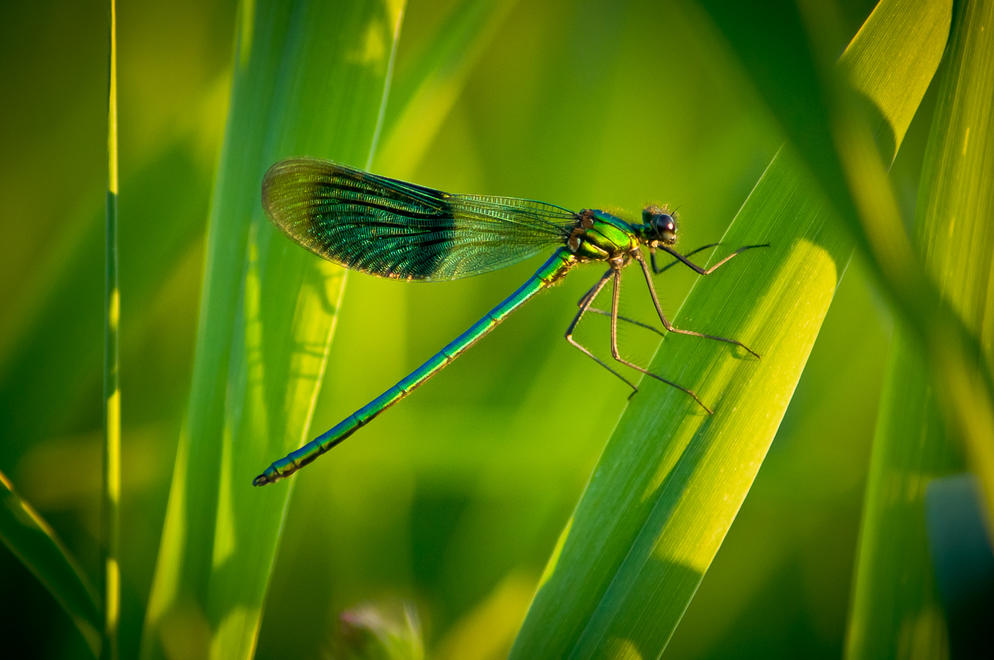 Dragonfly by David Behan | Irish Times Amateur Photographer of the Year 2012 Shortlisted