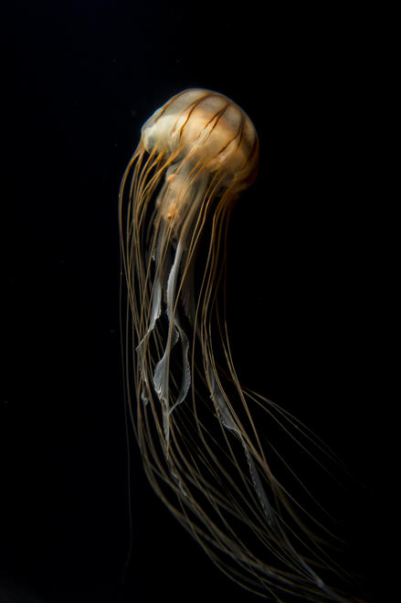 Flower Of The Abyss by Michael Kawano | LoveLife 2013 Category Winner, Aquatic Life Category