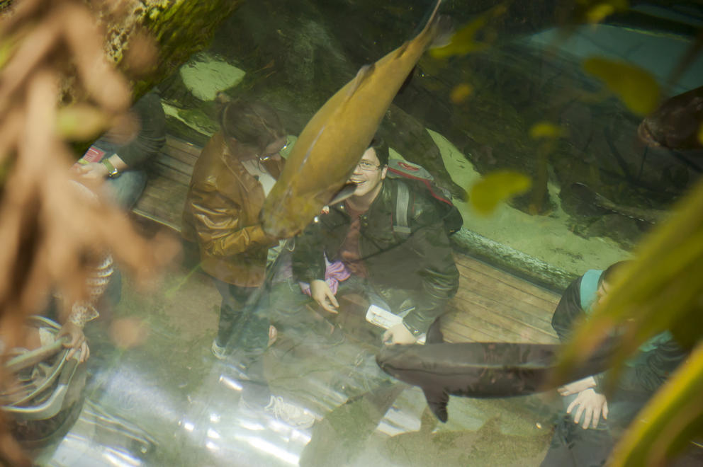 Fish At The Human Zoo