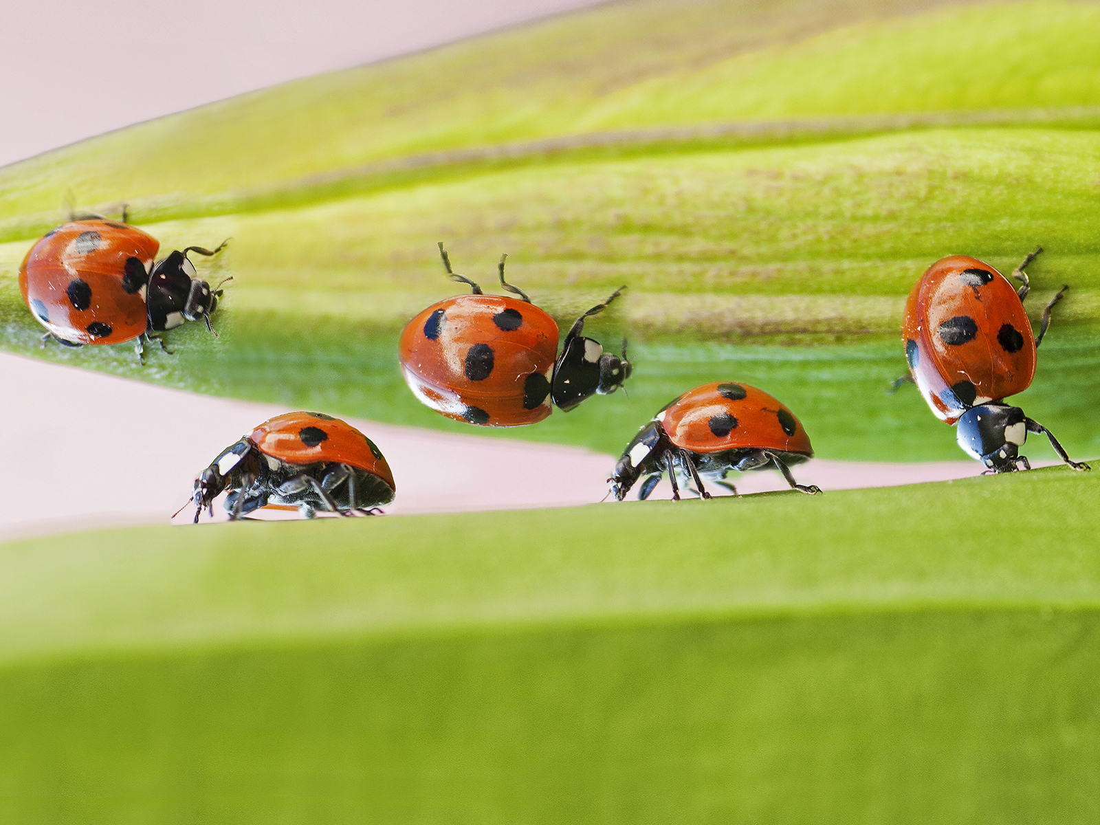 Ladybird Trail by Aoife Hester | Irish Times Photographer of the year Picturk Pic