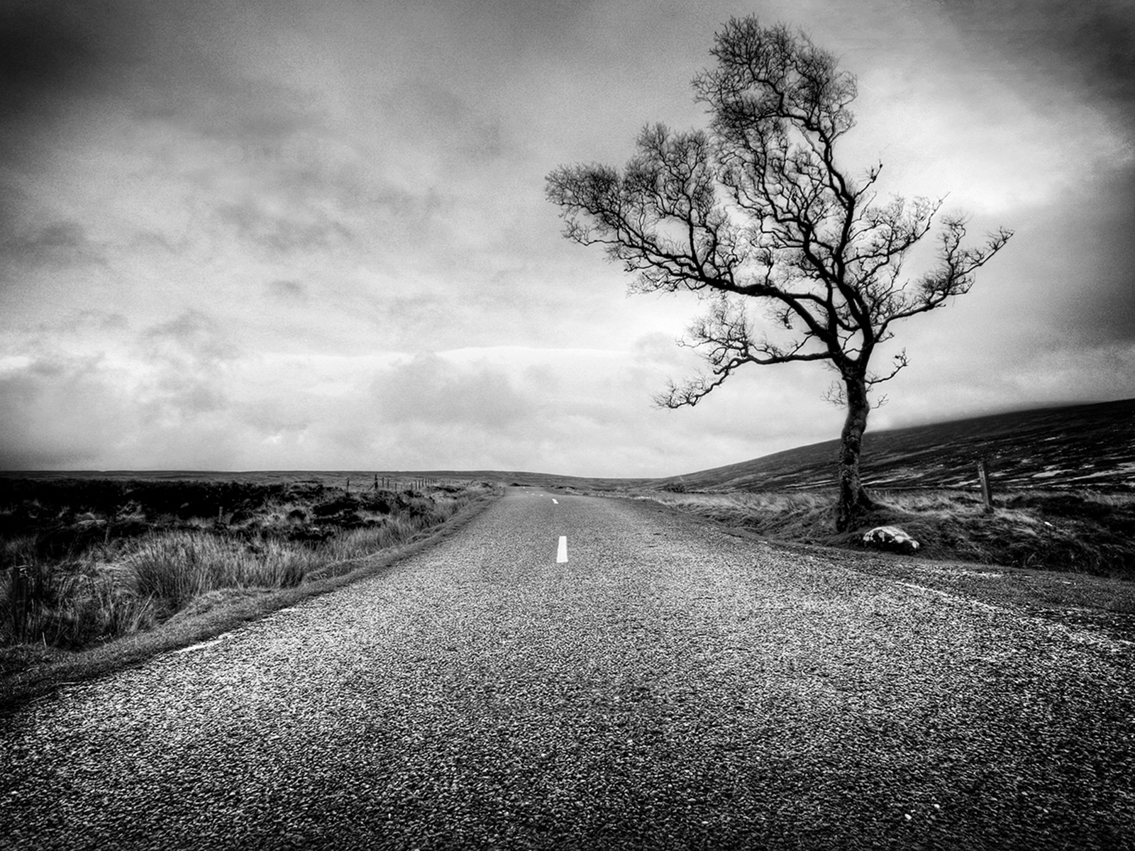Lonely Tree by Aoife Hester | Irish Times Photographer of the year Picturk Pic