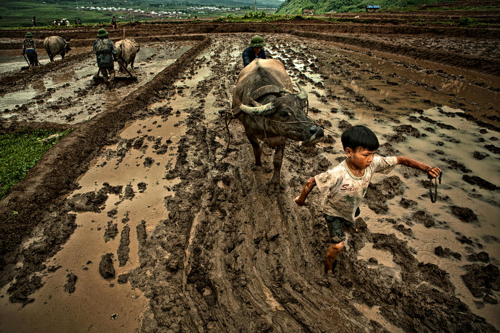 Mạnh Tài Đinh, Working Together, Syngenta Photo Award
