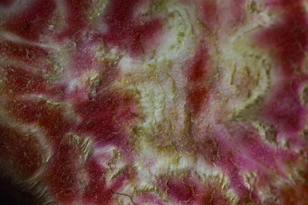 Liz Eve, Polluted Waterways - Dried Out Beetroo 02, Syngenta Photo Award