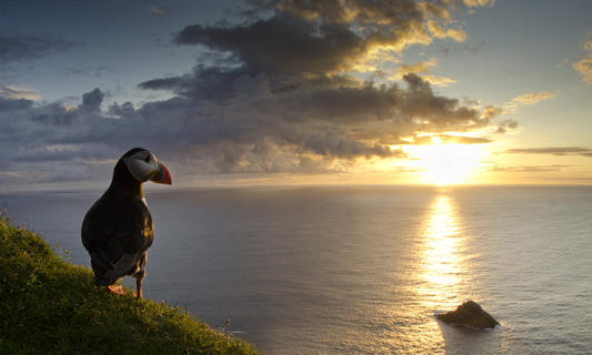 Puffin sunset by Jack Perks, Birds in the Environment  Category