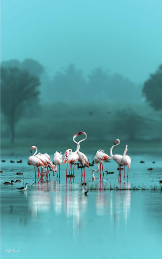 Flamingo scape by Chandrabhal Singh, Birds in the Environment  Category