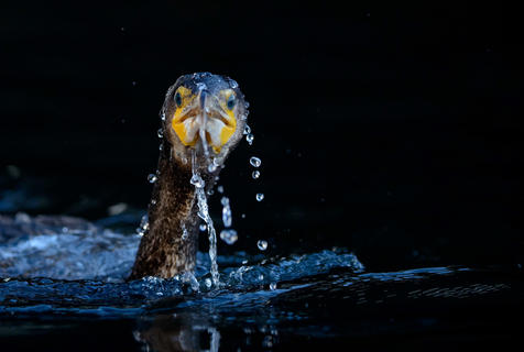 Surfacing by Oscar Dewhurst, Best Portrait Category