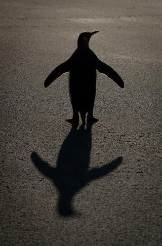 King  silhouette portrait by Rick Beldegreen, Best Portrait Category