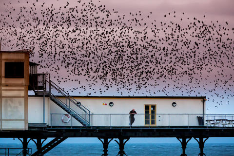 Starlings by Paul Cooper, Creative Imagery Category