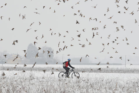 Riding in bramblings by Paolo Meroni, Birds in Flight Category