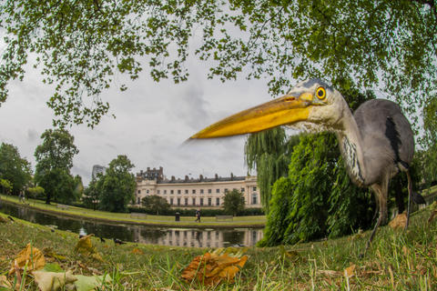 Urban heron by Sam Rowley, Birds in the Environment  Category