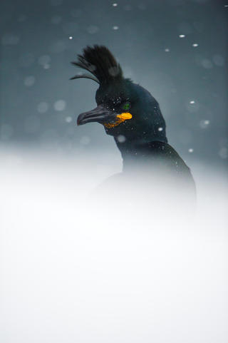 The shag by Espen Lie Dahl, Best Portrait Category