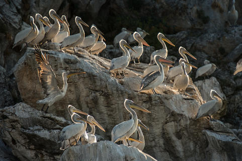 Ur5-73 by Roberto Nistri, Birds in the Environment  Category