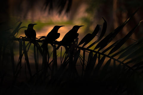 Hidden in the shadow by Mohd Khorshed, Bird Behaviour  Category