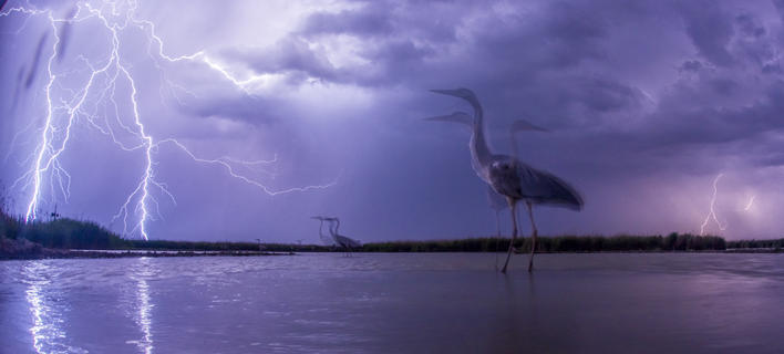 Lightning by Bence Mate, Birds in the Environment  Category