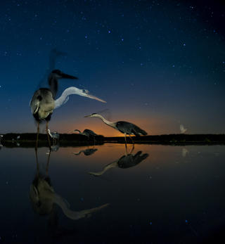 Night stars by Bence Mate, Birds in the Environment  Category