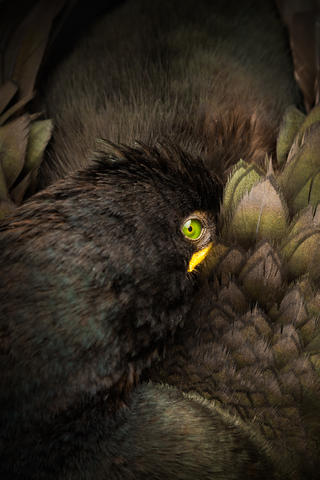 Shag by Steven Fairbrother, Best Portrait Category