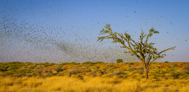 The budgie tree by Paul Williams, Birds in the Environment  Category