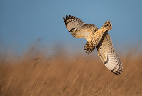 Going in by Andy Howe, Birds in Flight Category