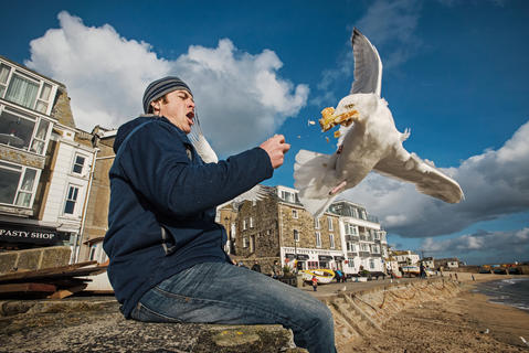 Pasty snatcher by Sam Hobson, Bird Behaviour  Category
