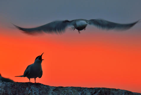 Shout from the dusk by Uryadnikov Sergey, Creative Imagery Category