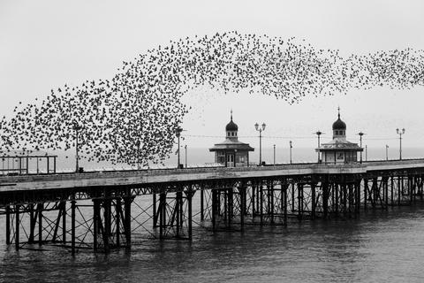 Murmuration of starlings by Yannick Dixon, Birds in the Environment  Category