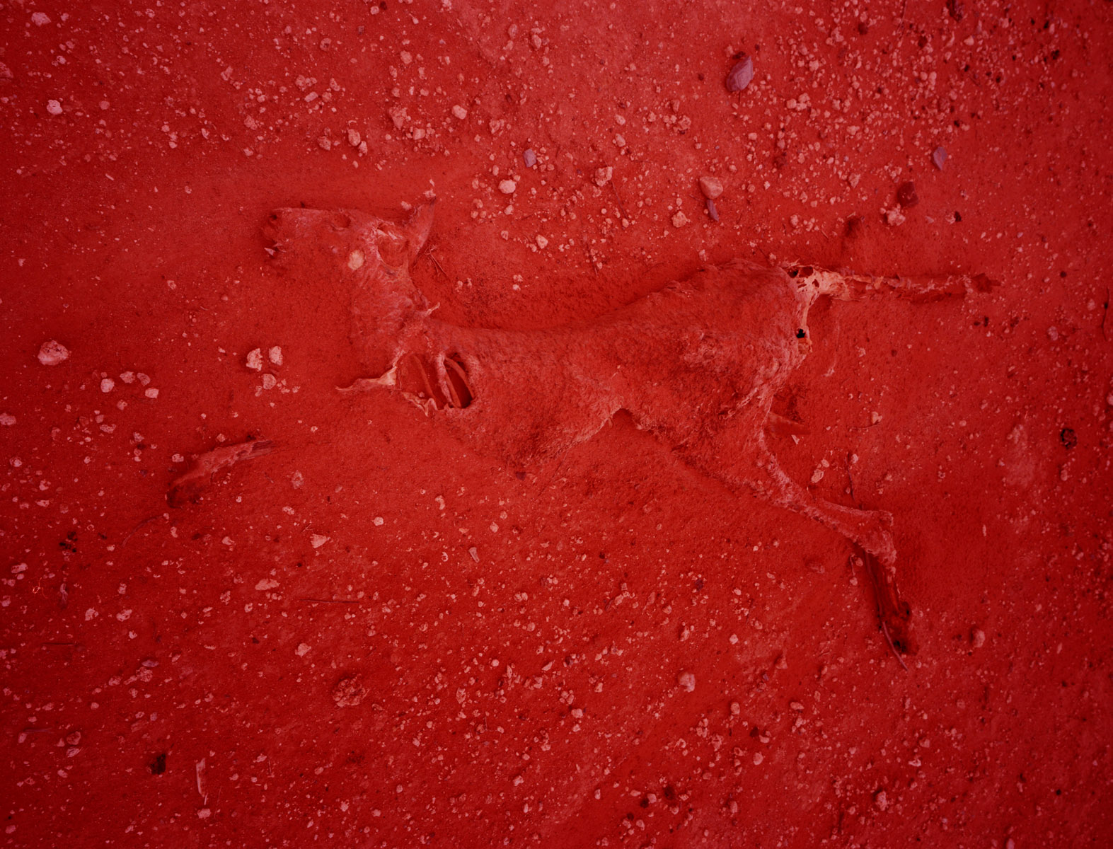 Dean Sewell, Australian Grey Kangaroo in Dust, Syngenta Photo Award